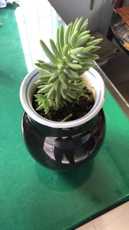 碳纤维花盆
